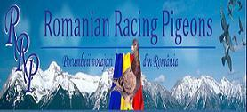 Romanian Racing Pigeon banner
