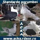 Logo Acka Porumbei - Standarde porumbei de ornament